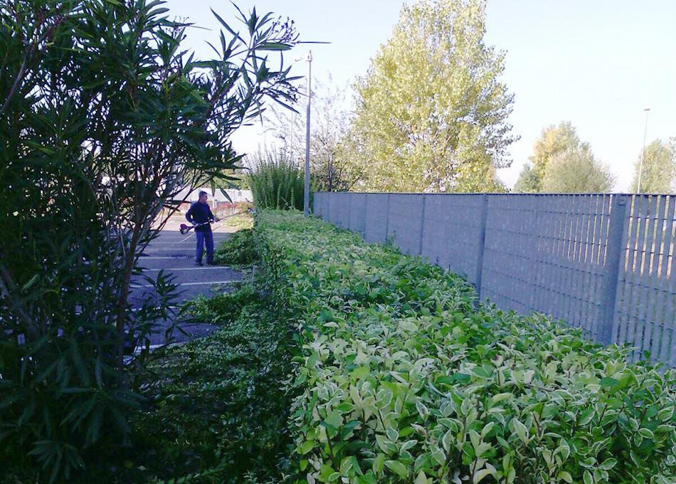 pulizia-verde-giardinaggio