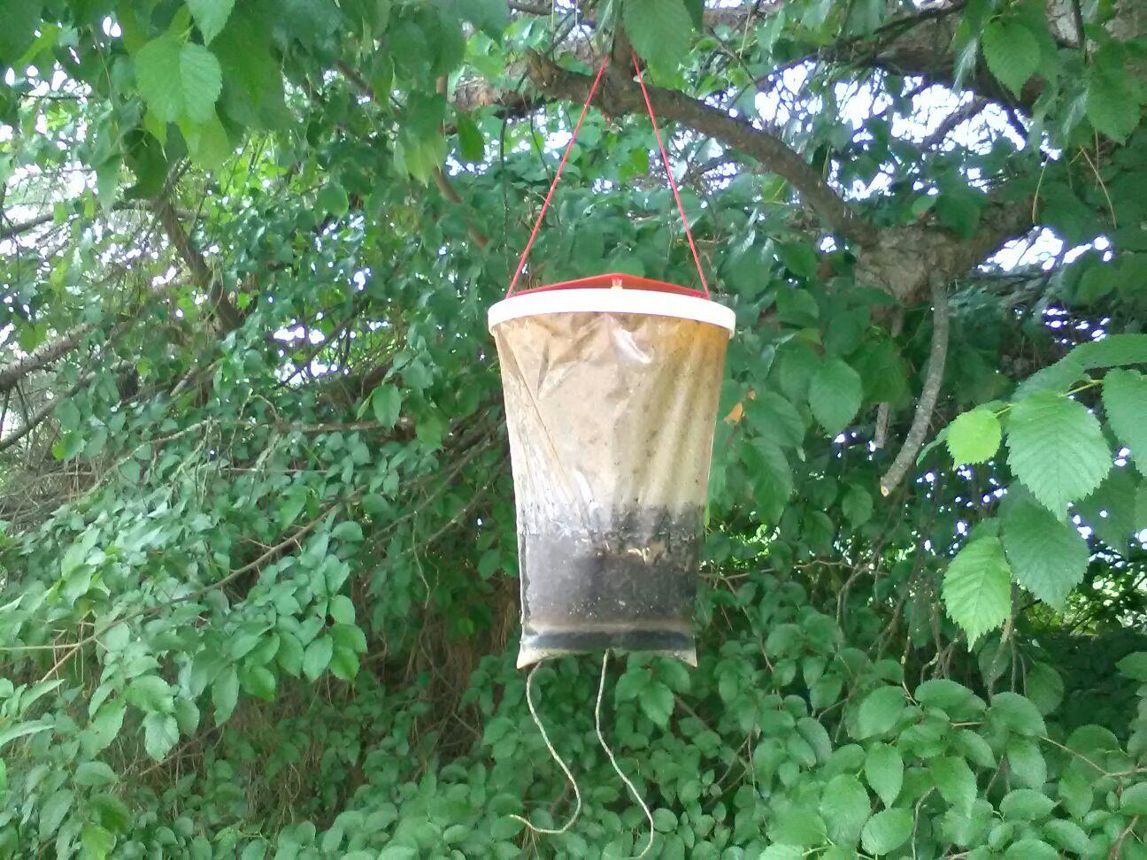 trappola-per-mosche-ligienica